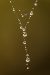 Necklace of spider-web and dew drops Near Waldron, Arkansas