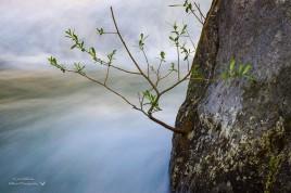Green Creek-04254