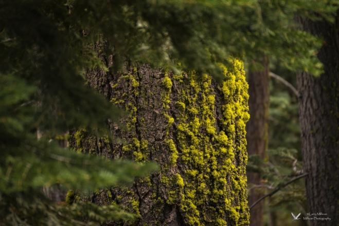 Yosemite NP-02967