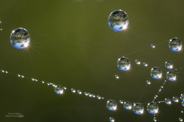 spider_web_dew_drops-DSC01337