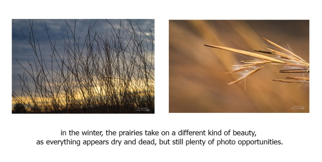 Vertical photos-prairies-4